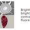 Lionheart FX 自動化活細胞影像系統